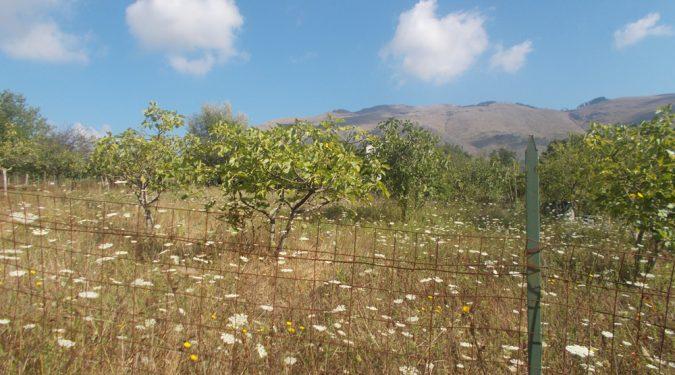 Licusati terreno agricolo in vendita