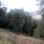uliveto_1